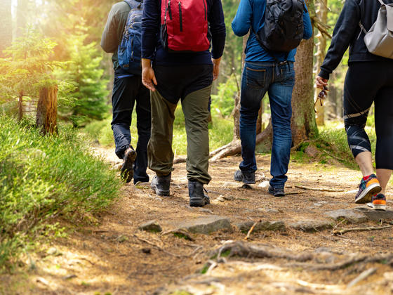 Group of people walking along a forest trail